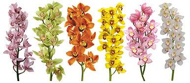BC Orchids_website_home_rijtje.jpg