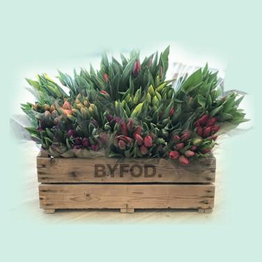 tulips_houten kist.jpg