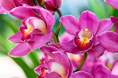 orchid_fel roze_shutterstock_564815422.j
