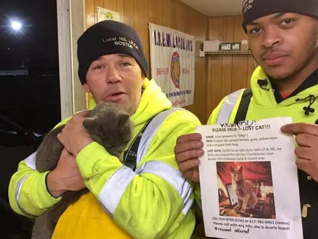 The Boston Globe: Cat found safe 9 days after falling from vehicle on I-93