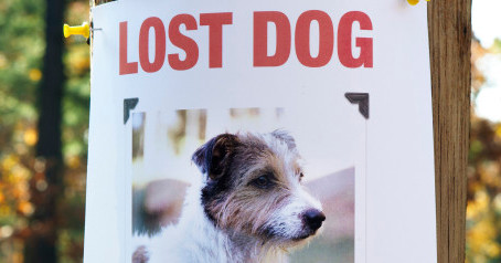 How to Best Utilize 'Missing Dog' Posters