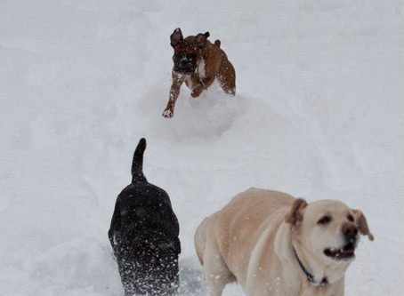 Here's Why Using an Off-Leash K9 is Critical