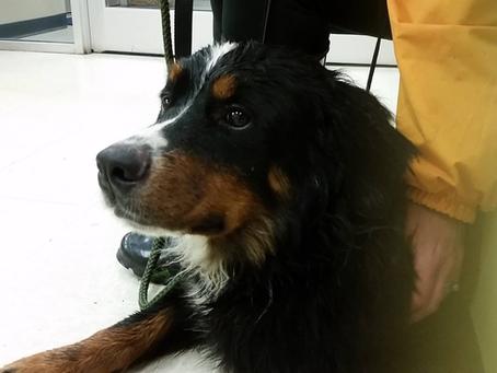 Sven the Dog #Found