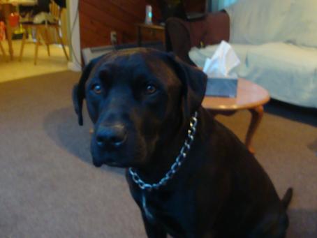 Thunder the Dog #Found