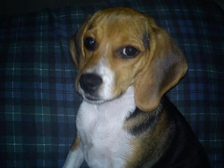 Callie the Dog #Found