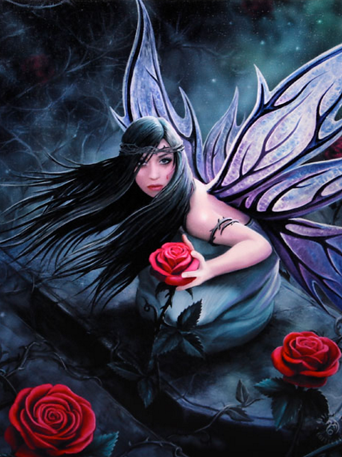 Rose fairy wall plaque by anne stokes