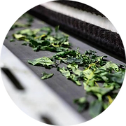 Drying Matcha Green Tea Leaves