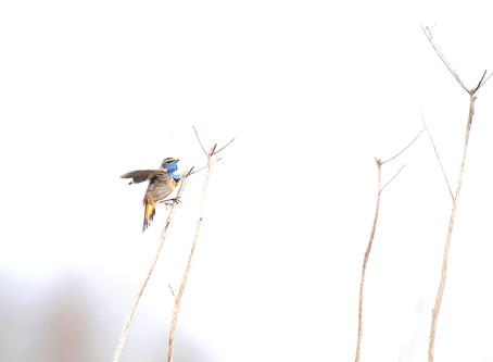 NATUURFOTOGRAFIE IN TIJDEN VAN CORONA...