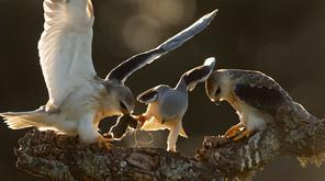 International Wildbird Photo Competition 2020
