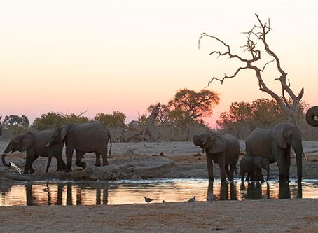 Het leven rond een waterpoel  (Savuti, Chobe National Park, Botswana)
