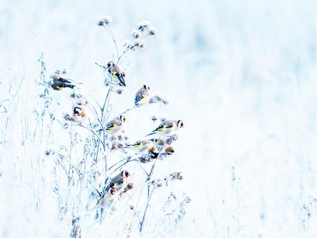 Bio Photo Contest: Groepje Putters in de winter