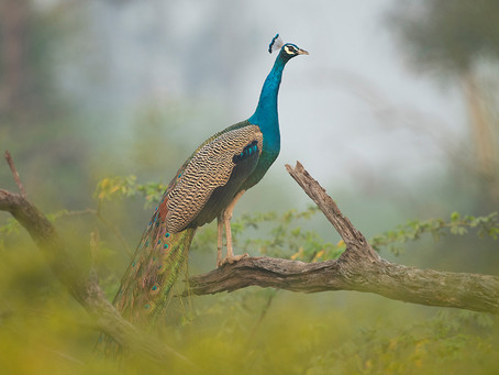 KEOLADEO NATIONAL PARK, INDIA