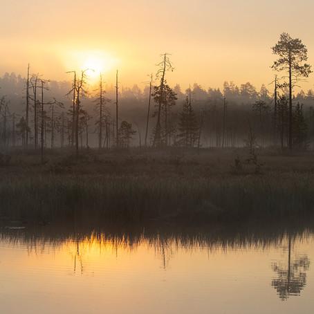 WILD TAIGA (FINLAND)
