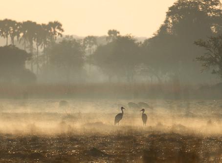 """Kafue National Park: """" Alleen op de wereld..."""""""