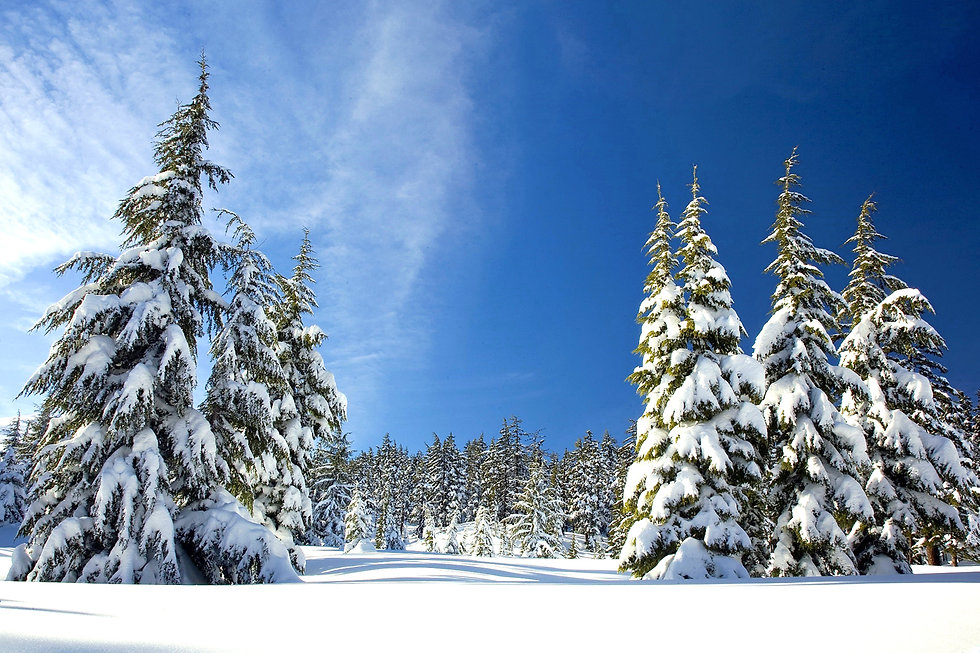 winter trees 1.jpg