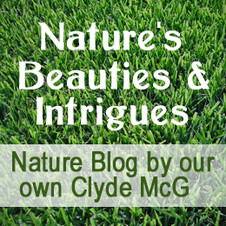 Nature's Beauties and Intrigues