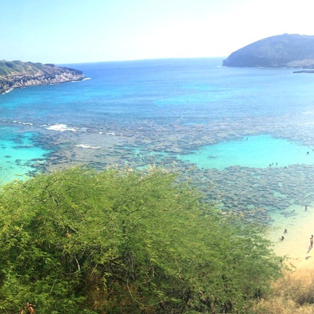 Oahu - A Proposal and a Week in Hawaii