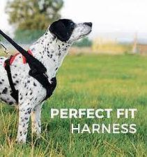 perfect fit harness 1.jpg