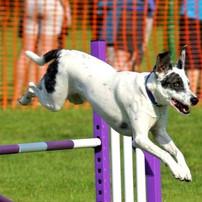 Max at Dartmoor jump 2_edited_edited.jpg