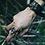 Thumbnail: Baphomet Ring