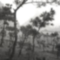 CH95101_Bao An_Guangxi (line of trees).j