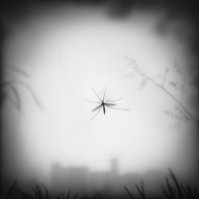 A Calm Mosquito120x120cm