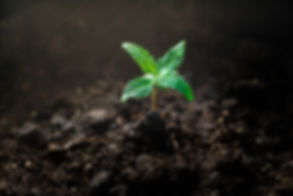 Seedling Shot a.jpg