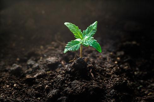 Seedling Shot a.jpg