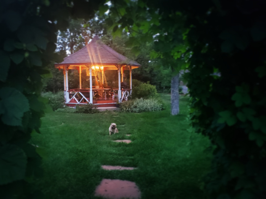 Gazebo with dog feature