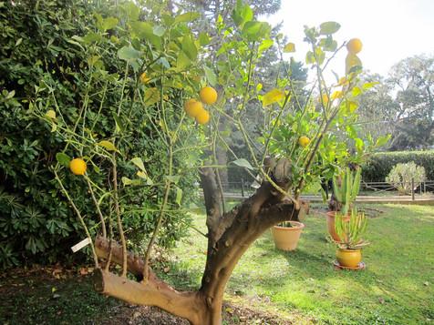 jardin (14).JPG