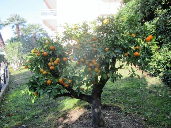 jardin (15).JPG