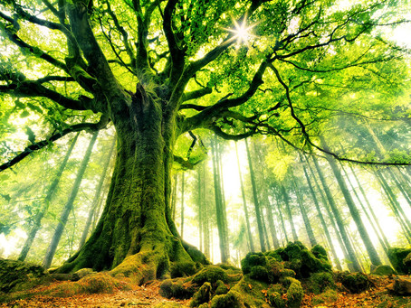 """294 """"Love is a tree with branches in forever with roots in eternity and a trunk nowhere at all"""""""