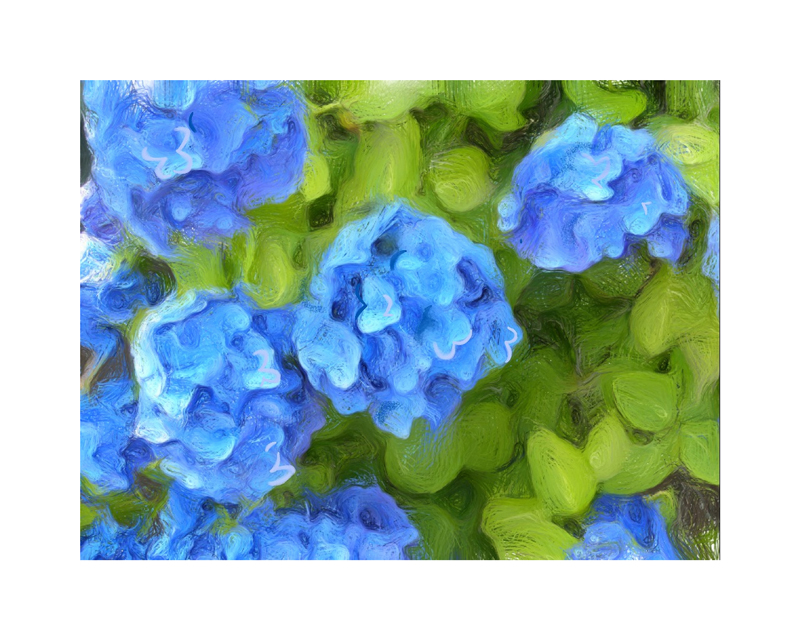 Hydrangeas Blues
