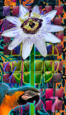 G7: Passionflower
