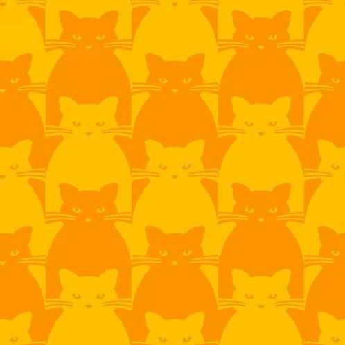Kitty Kitty Orange