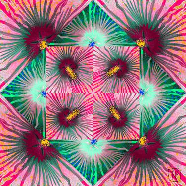 8_15_2020 Hibiscus Fireworks