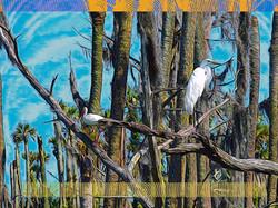 Snowy Egrets, Orlando Wetlands