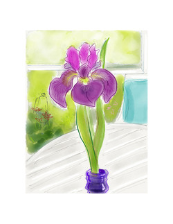 Siberian Iris 'ChilledWine'