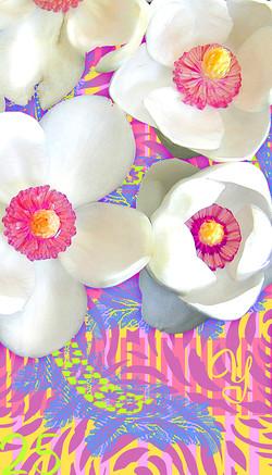 Y25: Oyama Magnolia