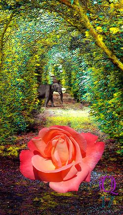Q17: Rose