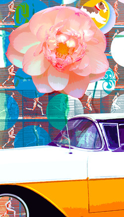 C3: Sacred Lotus Flower