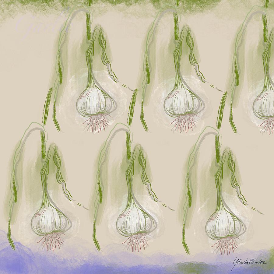 2_17_2020 Garlic
