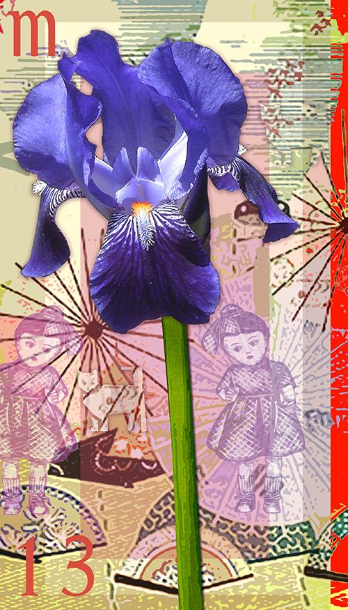 M13: Bearded Iris
