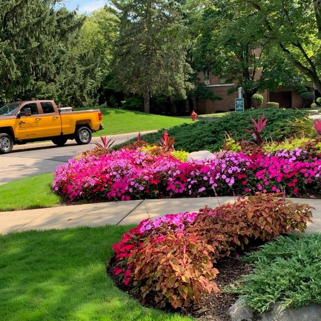 Summer Annual Flowers