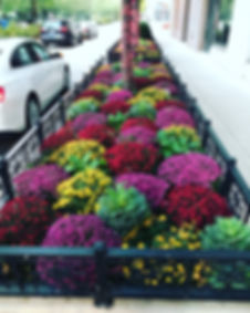Fall Annuals 22.jpg