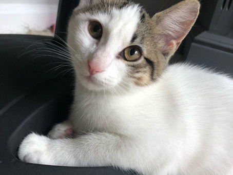 Adoptable Kittens!