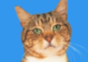 Cat Head_edited.png