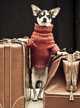 chien valises.jpg