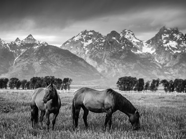 A black and white of the local horses against the backdrop of the Grand Tetons (DSC_2897)
