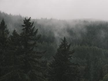 Mist among the trees in Glen Affric, Scotland